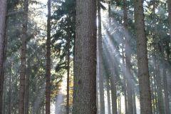 Promienie słońca przebijające się przez korony drzew