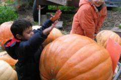 1.pumpkins