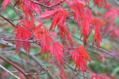 7.czerwien_jesieni