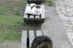 Co ławka, to kot :D
