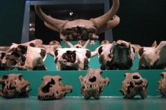 szczątki z wykoplaisk archeologicznych; Groninger Museum, Groningen