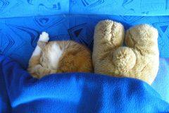 Śpiący Ziutek