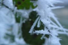 2.zielony