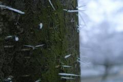 Niesamowite 'szpileczki' na pniu drzewa